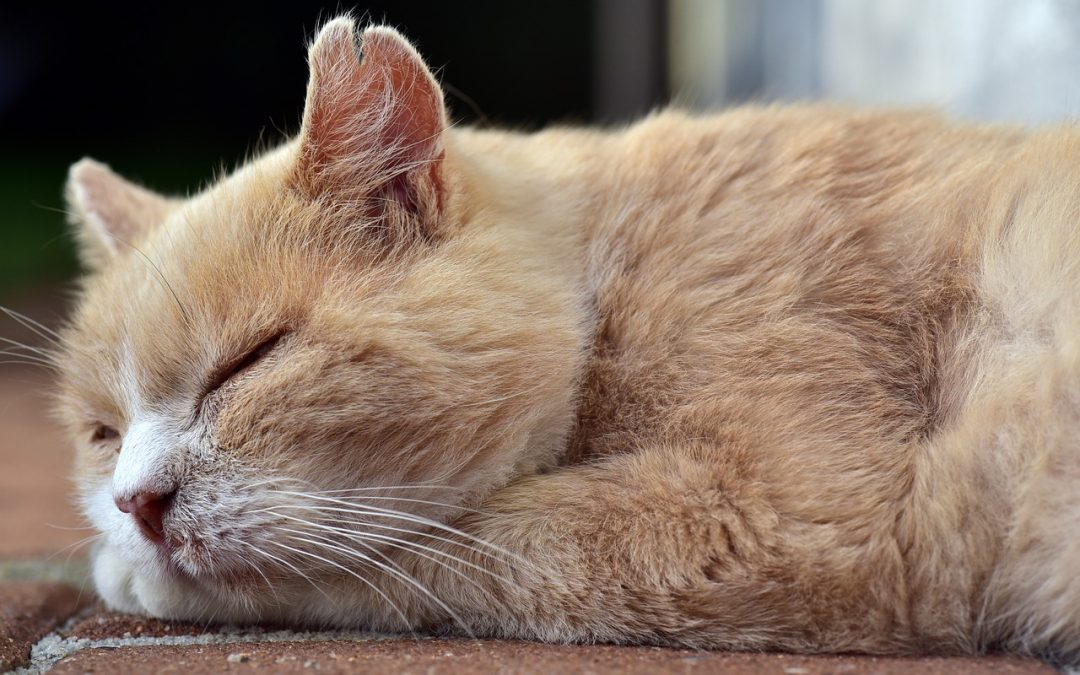 Jógával a tavaszi fáradtság ellen