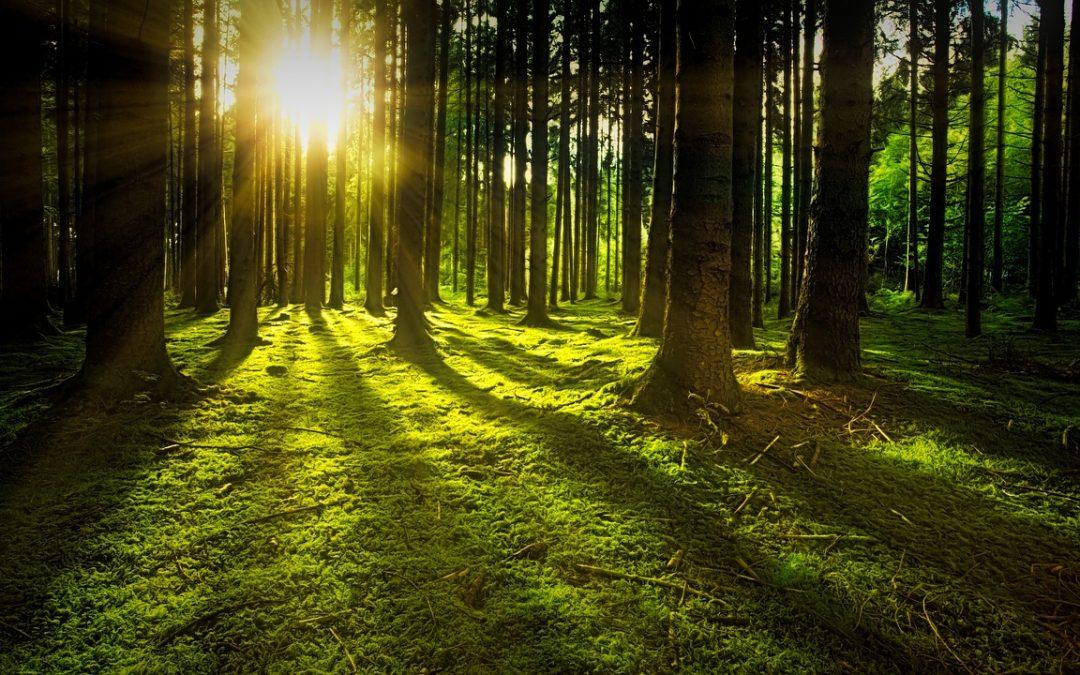 Ami a skandinávoknak a természet, az nekünk a jóga